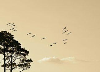 migracions